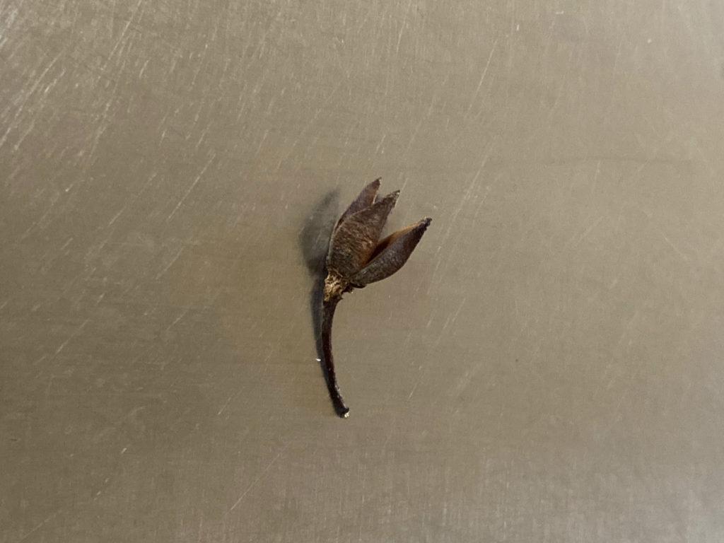 姫沙羅の種
