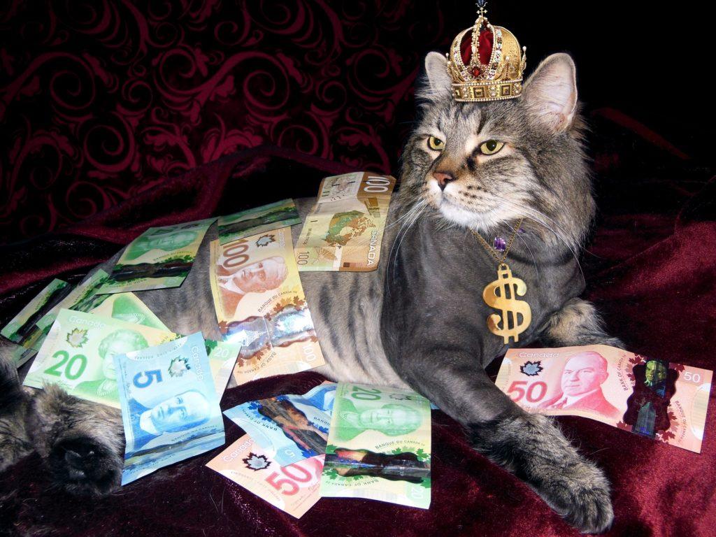 Money and cat